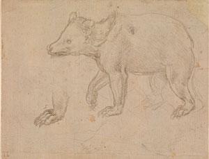 Leonardo da Vinci's A Bear Walking (Metropolitan Museum, c. 1482–1485)