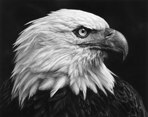 Robert Longo's Untitled (Eagle) (Brooklyn Museum, 2017)
